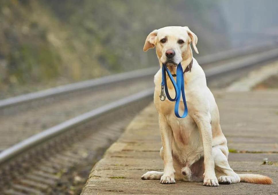 Как найти потерявшуюся собаку