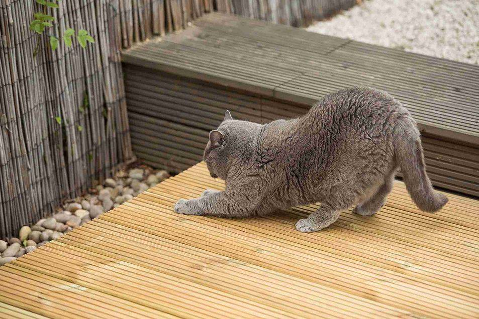 Неприятный запах от кошки: почему кошка пахнет, источники запаха и правила гигиены неприятный запах от кошки: почему кошка пахнет, источники запаха и правила гигиены