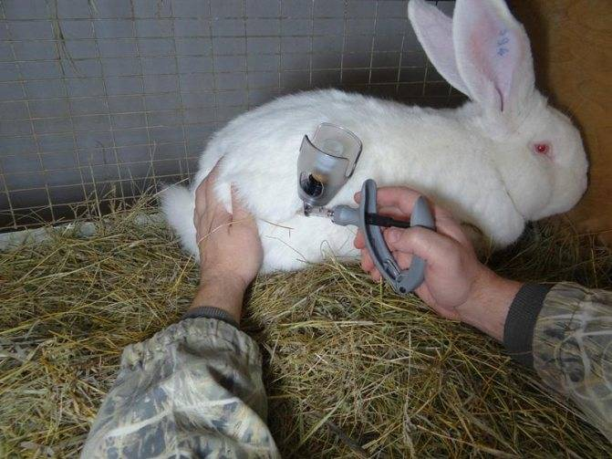 У кролика понос и ничего не ест   мой сад и огород