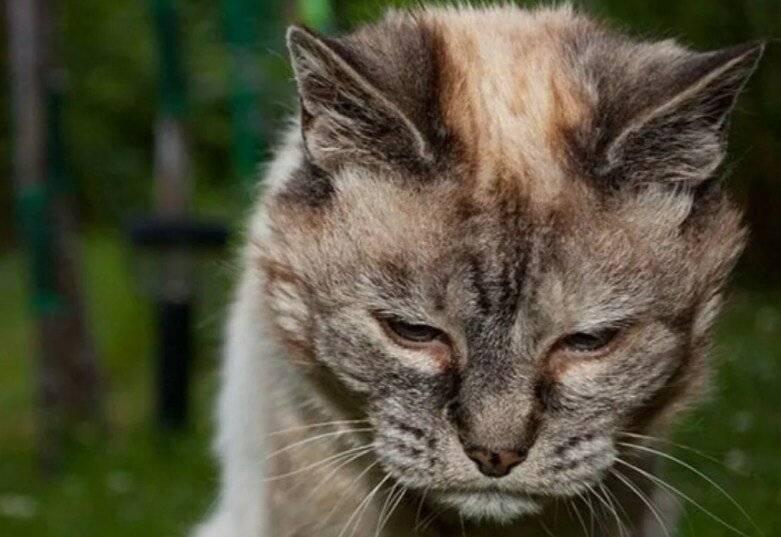 Пожилые кошки