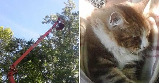 2 надежных варианта, как снять кота с дерева если он уже долго там сидит