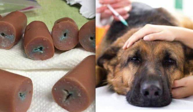 Почему собака кусает свой хвост и нужно ли беспокоится | все о собаках