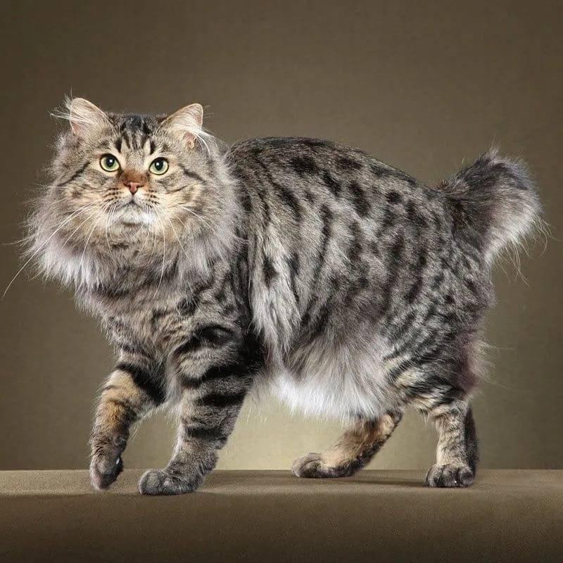 Кошки всех пород с фотографиями, названиями и особенностями характера