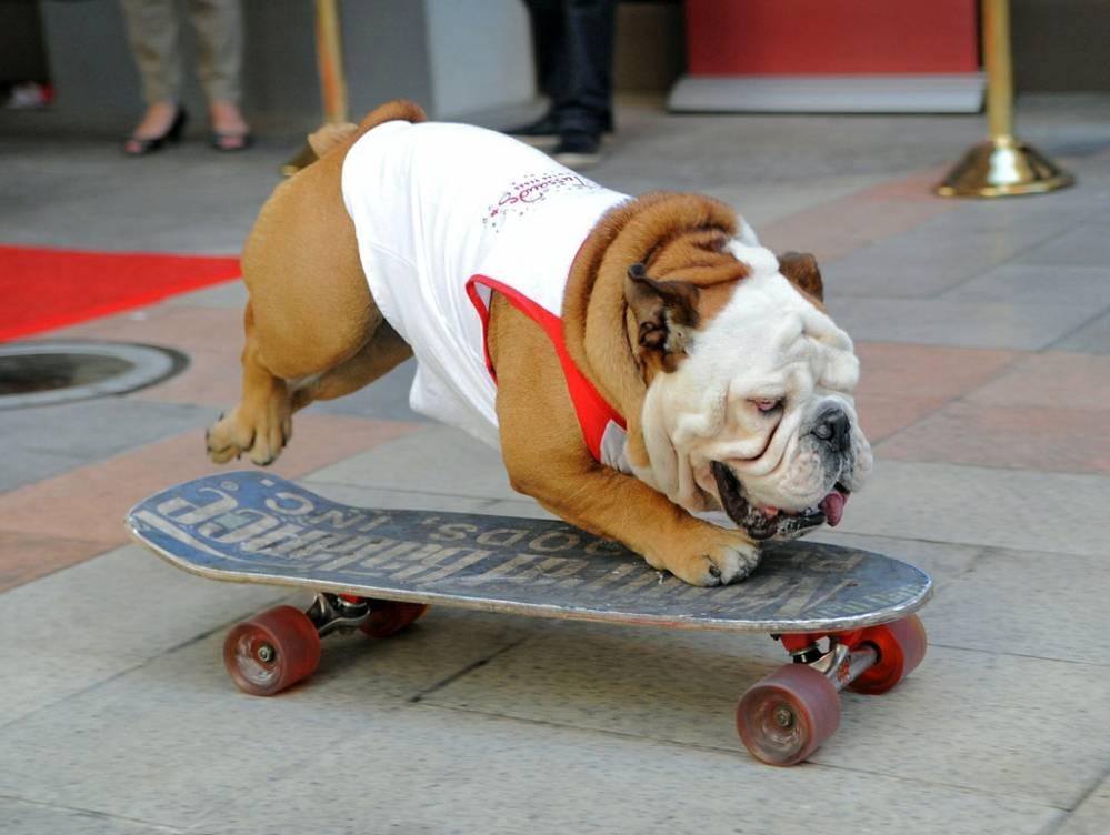 Смешные собаки: самые прикольные и веселые
