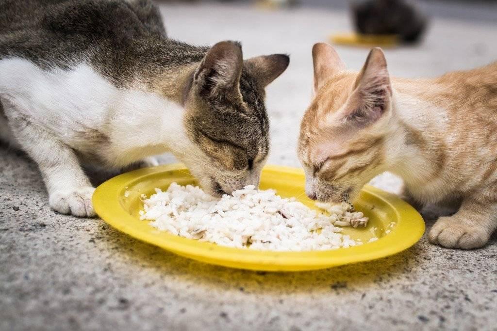 Можно ли кошкам есть рыбу