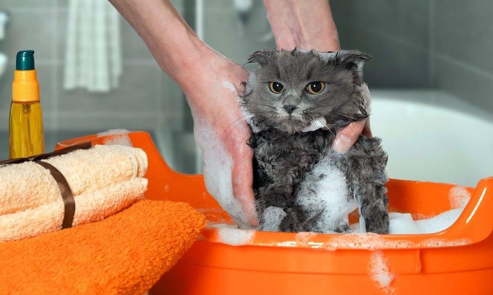 Проще, чем кажется: как лучше мыть котёнка