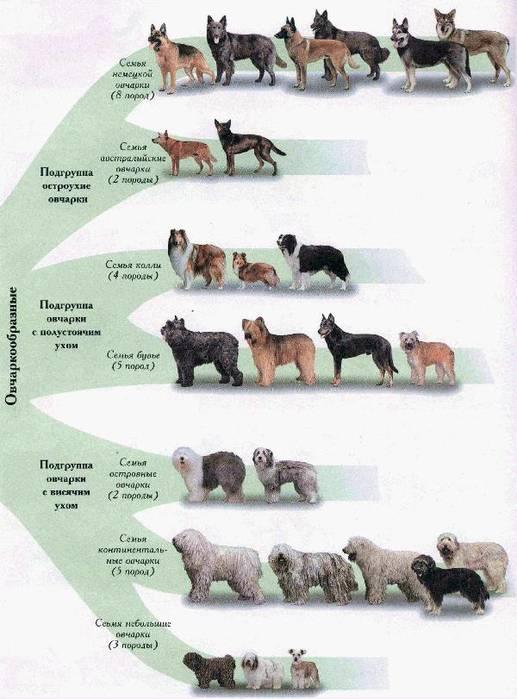 Подробно об истории происхождения собак на земле: когда и от кого появились
