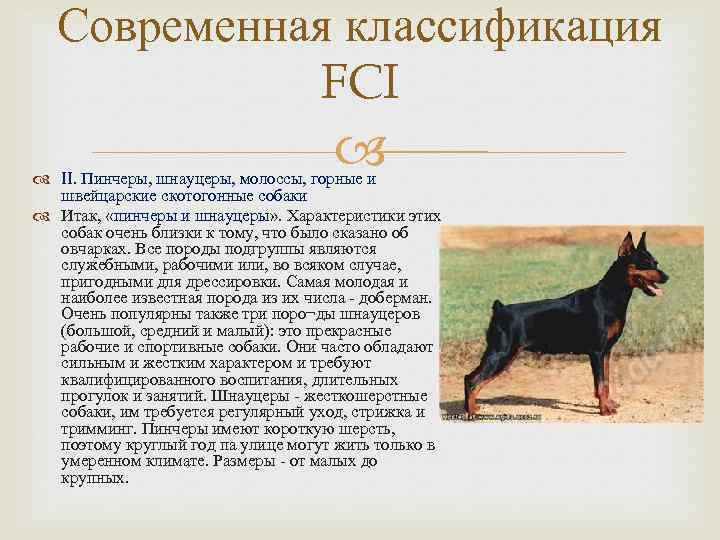 10 пород собак для неопытных владельцев — catch.today