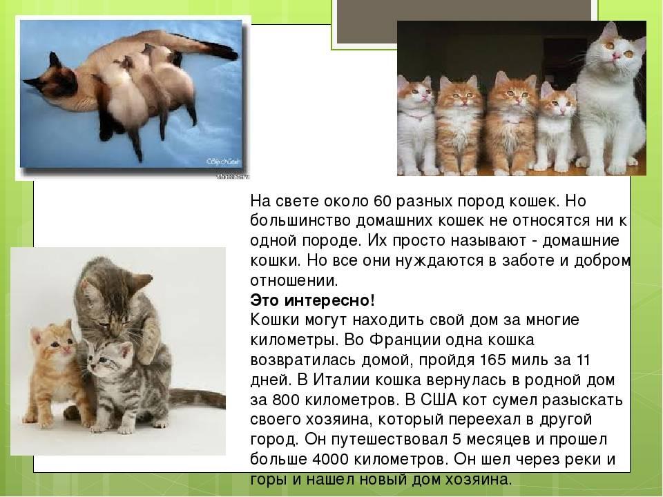 Как приучить кошку к когтеточке: 6 эффективных советов