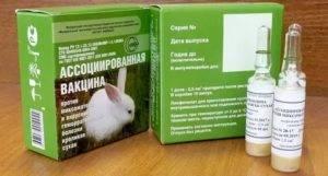 Вся информация про миксоматоз у кроликов