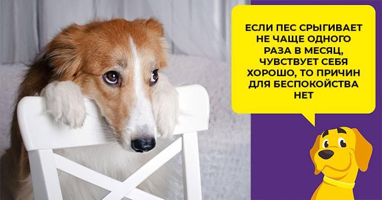 Собаку вырвало пеной с кровью: что делать при рвоте с кровью, причины и лечение у щенка и взрослого питомца, почему блюёт с красной примесью и слизью