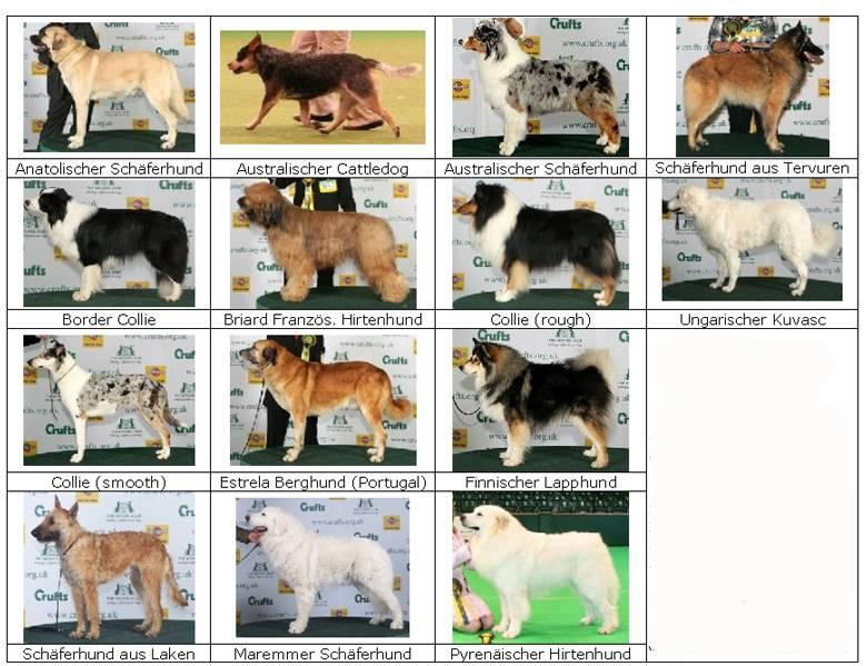 Все овчарки с названием и фото: 60 видов