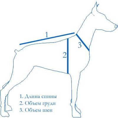 Варианты размеров одежды для собак, как снять мерки