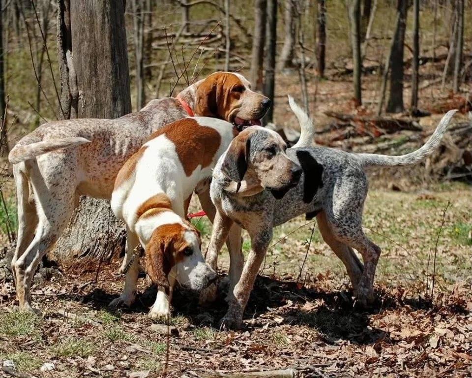 5 охотничьих пород собак, которые могут стать верными друзьями | gafki.ru | яндекс дзен