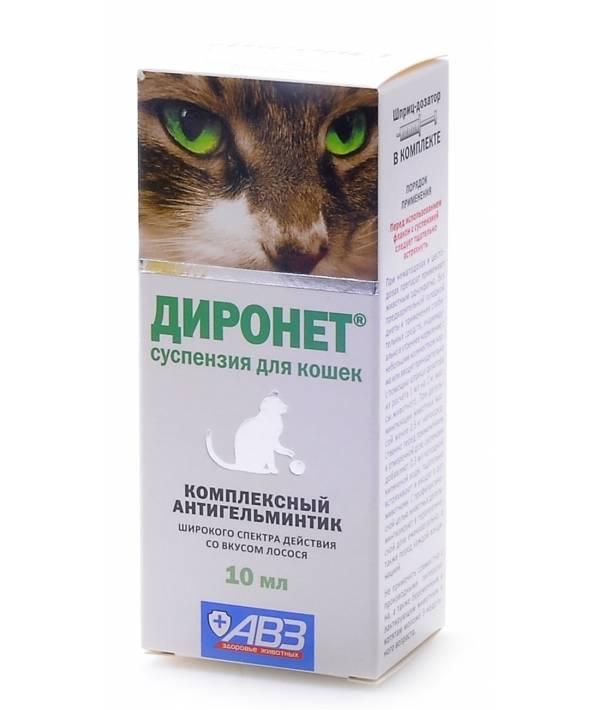 Слабительное для кошек в домашних условиях: причины и симптомы появления запора