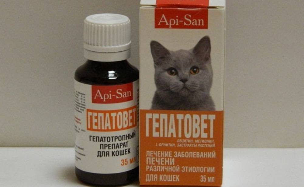 Какие обезболивающие препараты применяют для лечения кошек