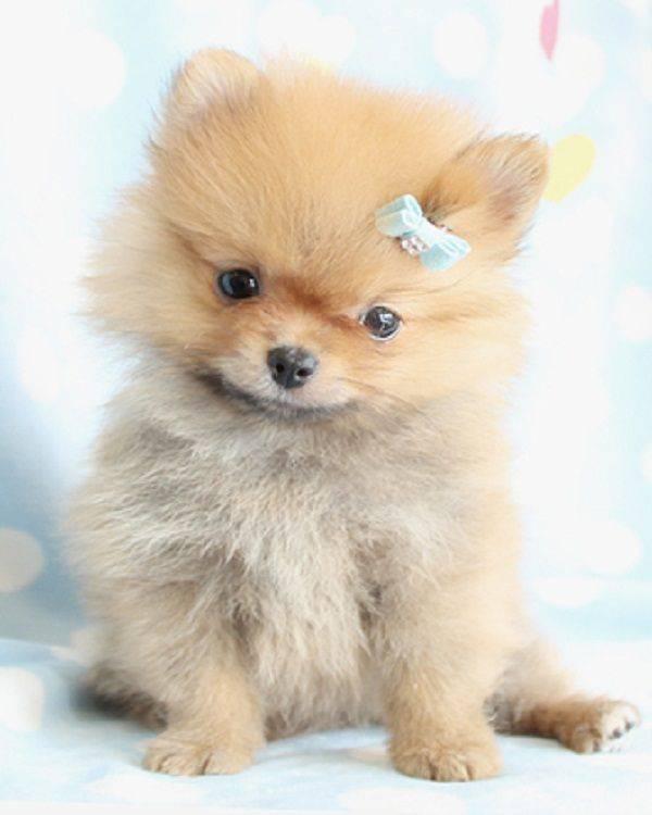 Топ-10 самых милых пород собак