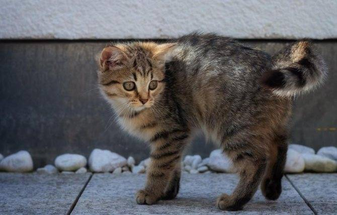 Как поймать кота и пристроить его в дальнейшем: методы и средства