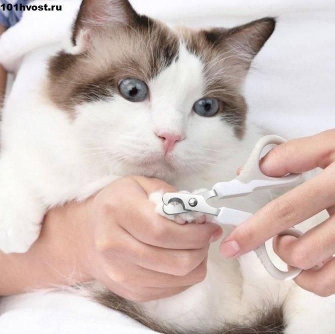 Нужно ли стричь кошке когти?