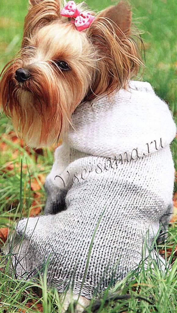 Как связать собаке свитер спицами (для начинающих)