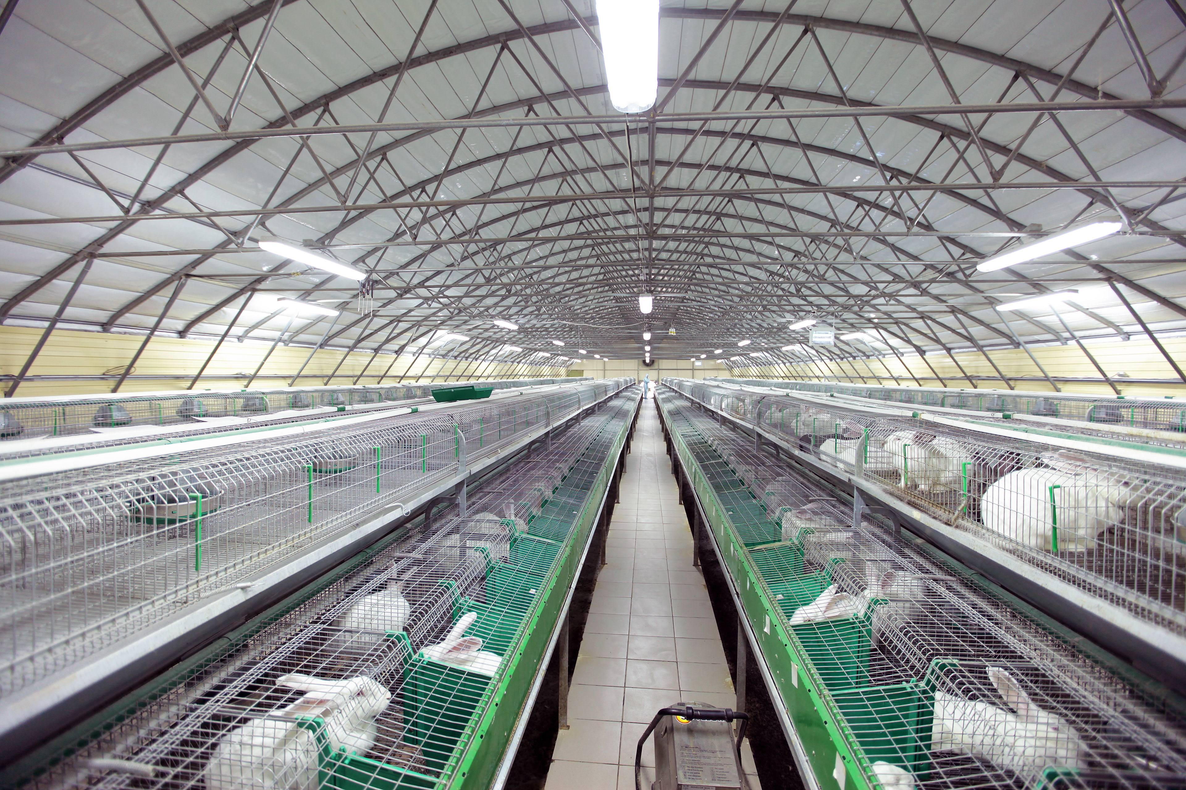 Кроличья ферма: описание, обоснование необходимости, метод постройки мини фермы своими руками