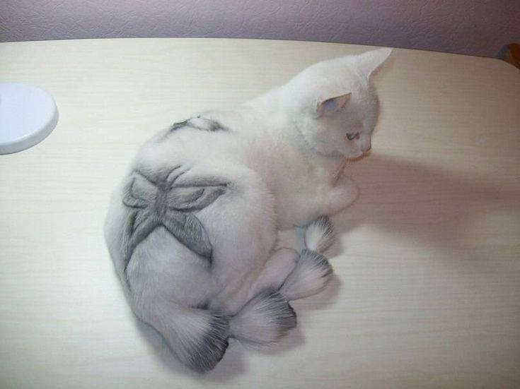 Как самому подстричь кота: инструкция с фото и видео