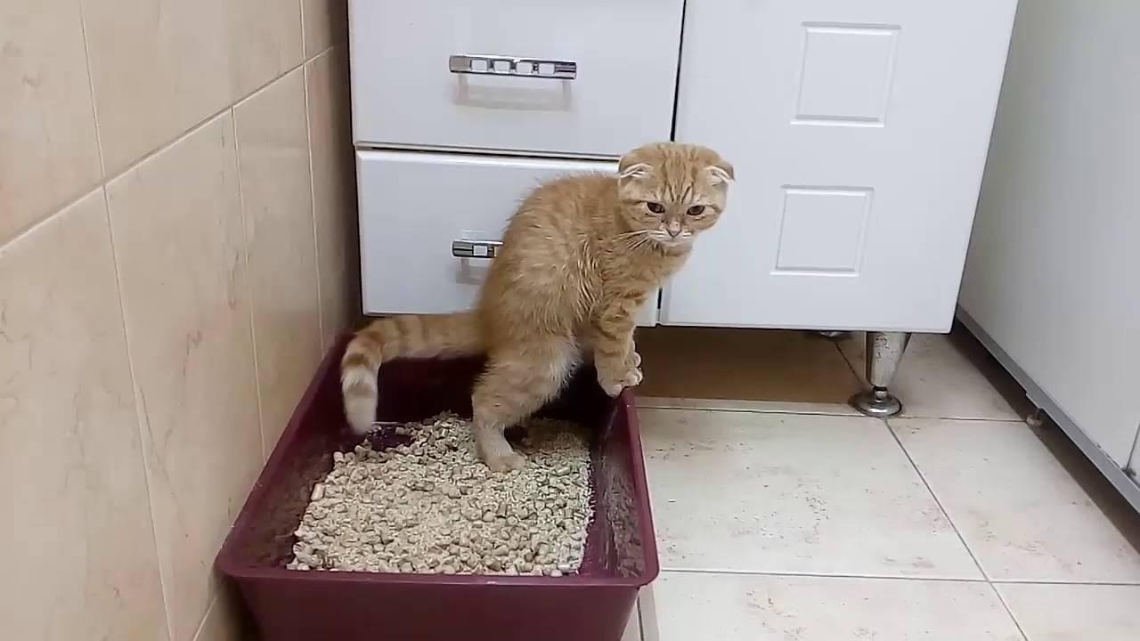 Как часто котенок ходит в туалет: по большому и по маленькому