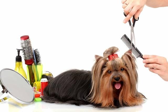 Моя профессия — называется грумер или парикмахер для животных. парикмахер для собак – что это за профессия