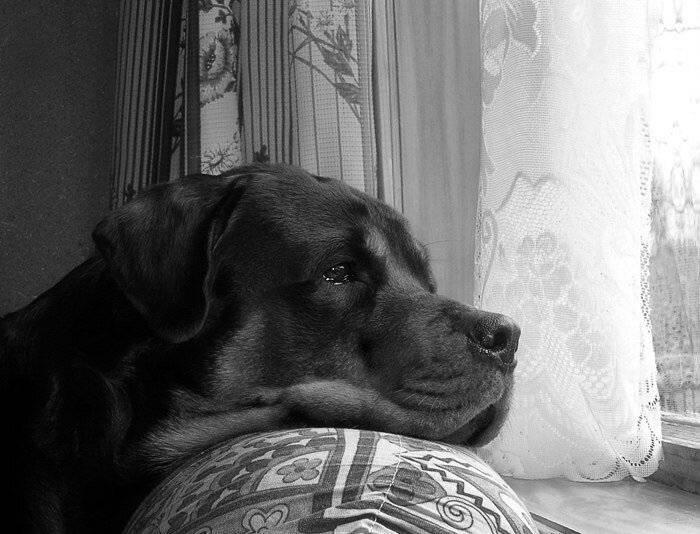 7 поступков хозяина, которые вызовут у собаки грусть и обиду
