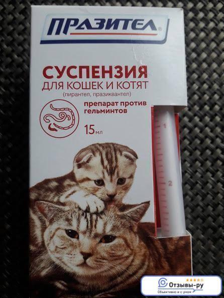 Пирантел для кошек: как защитить питомца от паразитов
