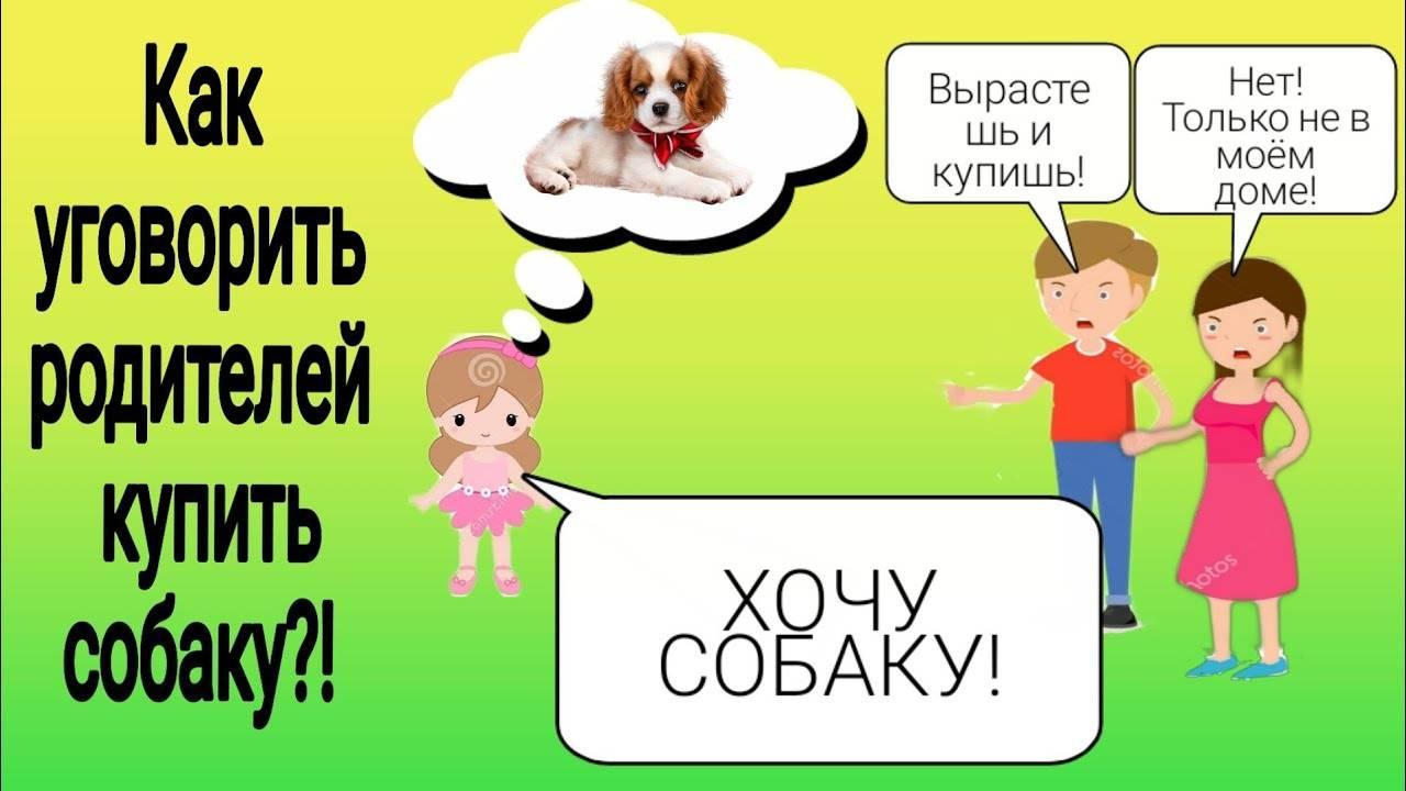 Как уговорить родителей завести собаку и что делать если они не соглашаются
