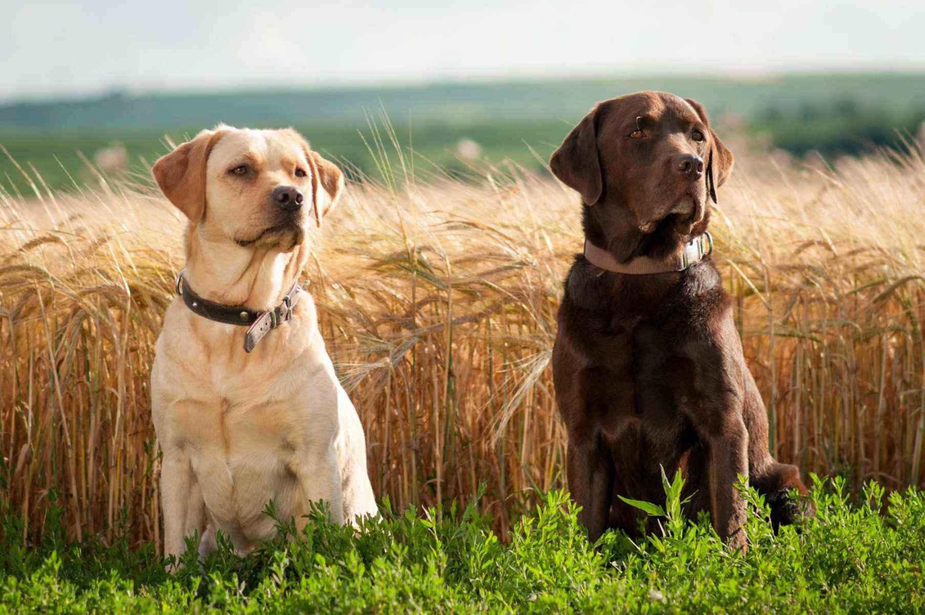 ?лучшие породы собак для содержания в квартире [#топ-19]