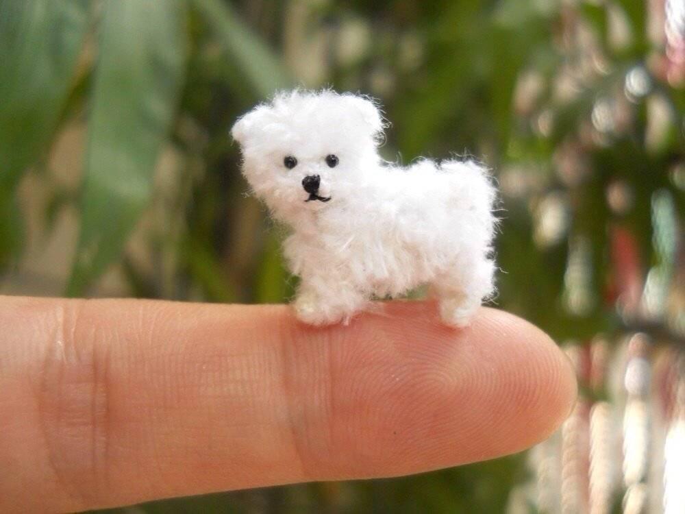 Маленькие пушистые собачки (32 фото): волосатые и лохматые маленькие породы собак с названиями