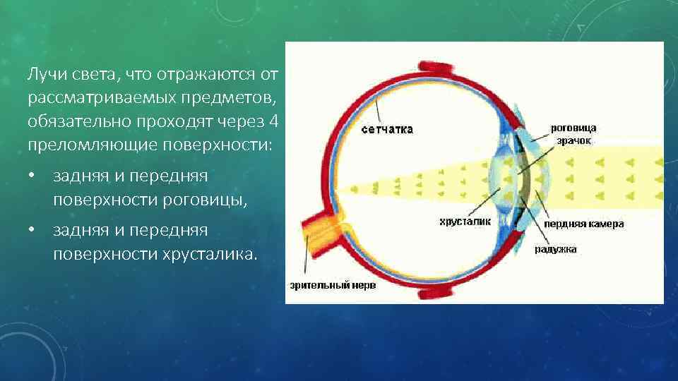 Из каких слоев состоит сетчатка глаза, как они называются, их функции