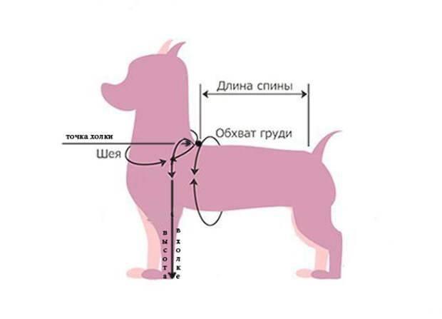 Как измерить рост собаки в холке – навык, который необходим любому владельцу
