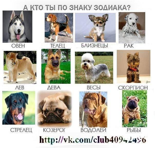 Какая собака подходит вам по знаку зодиака: выбираем