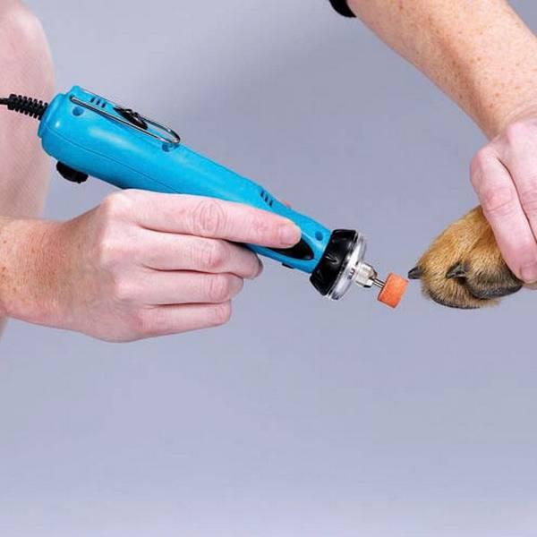 Как правильно стричь когти собаке в домашних условиях: подробная инструкция