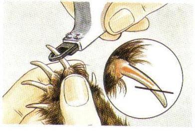 Как правильно подстричь когти собаке в домашних условиях