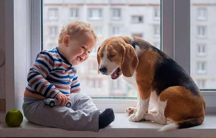 Породы собак для квартиры для начинающих и детей
