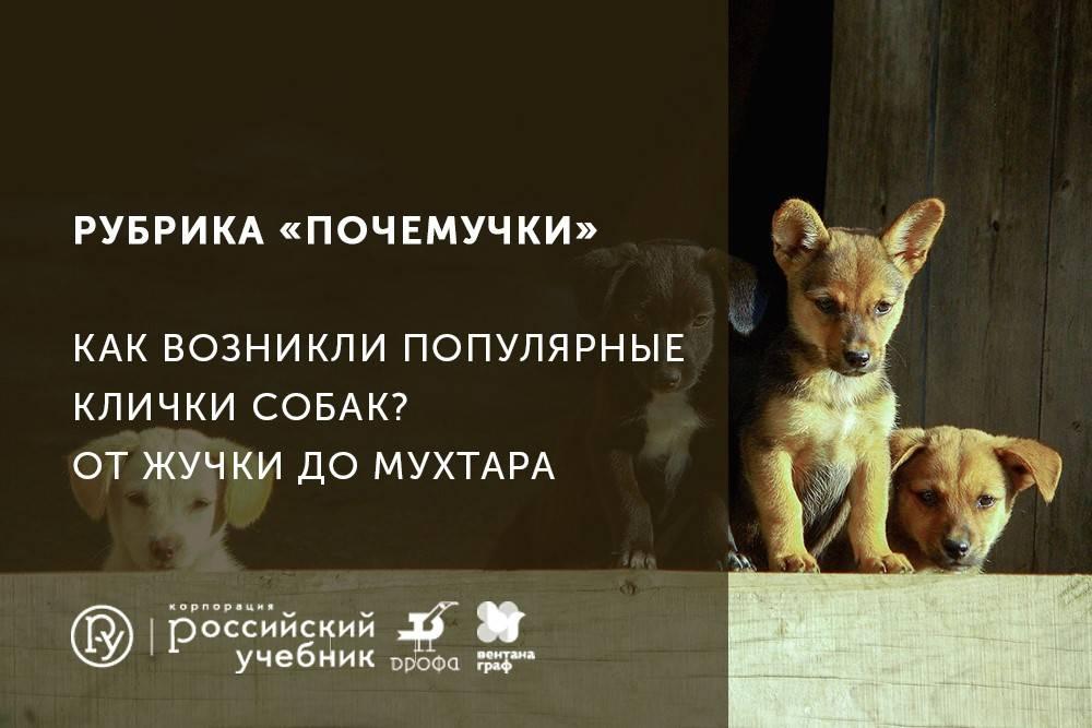 Что означает кличка ральф для собаки. история происхождения и толкование имени ральф. имя как фраза - заболевания-мед
