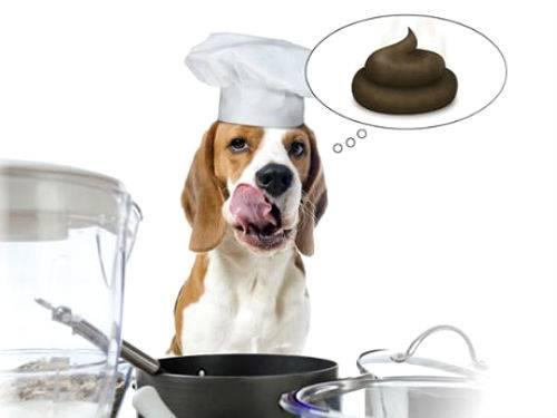 Причины, почему собака ест экскременты, и способы отучения ее от этого