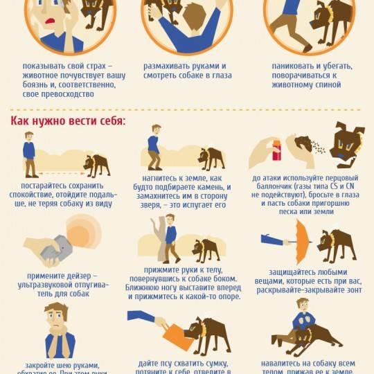 Что делать, если напала собака: как себя вести, способы защиты