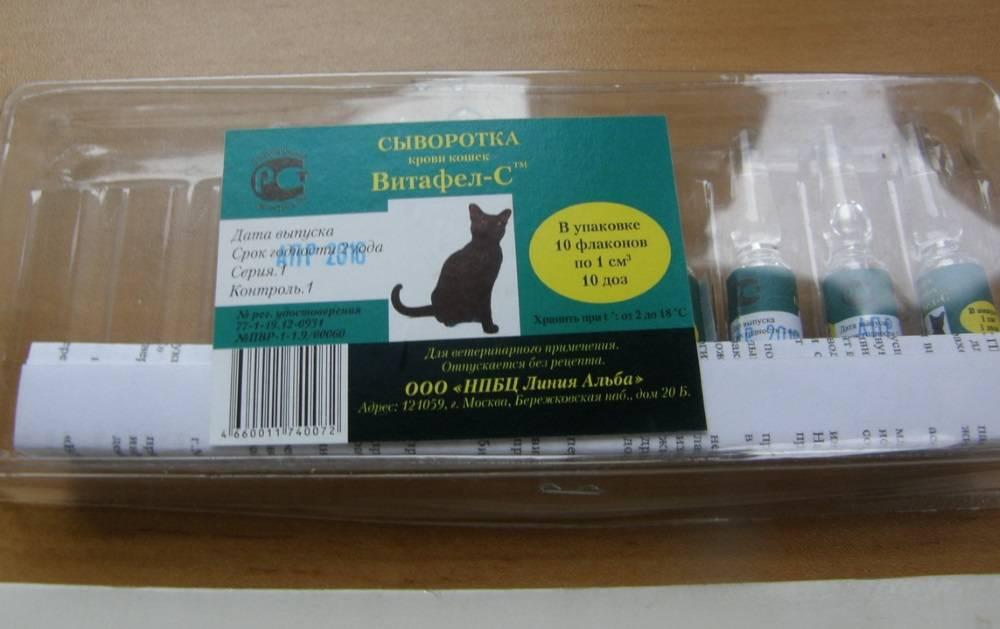 Сыворотка для котят для чего она нужна. витафел c для кошек: инструкция по применению