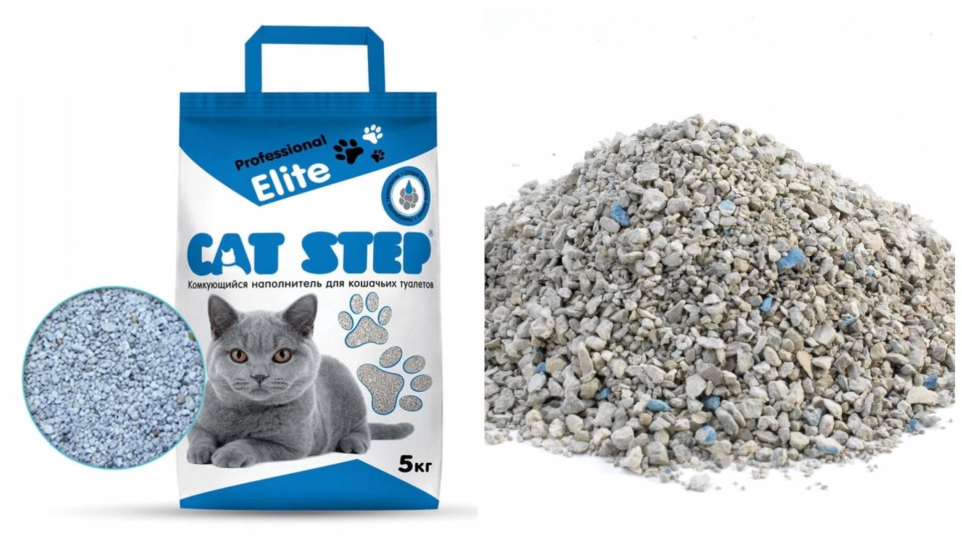 Котенок ест наполнитель: почему кошка есть глину для туалета? что делать, если кот кушает впитывающий наполнитель из лотка?
