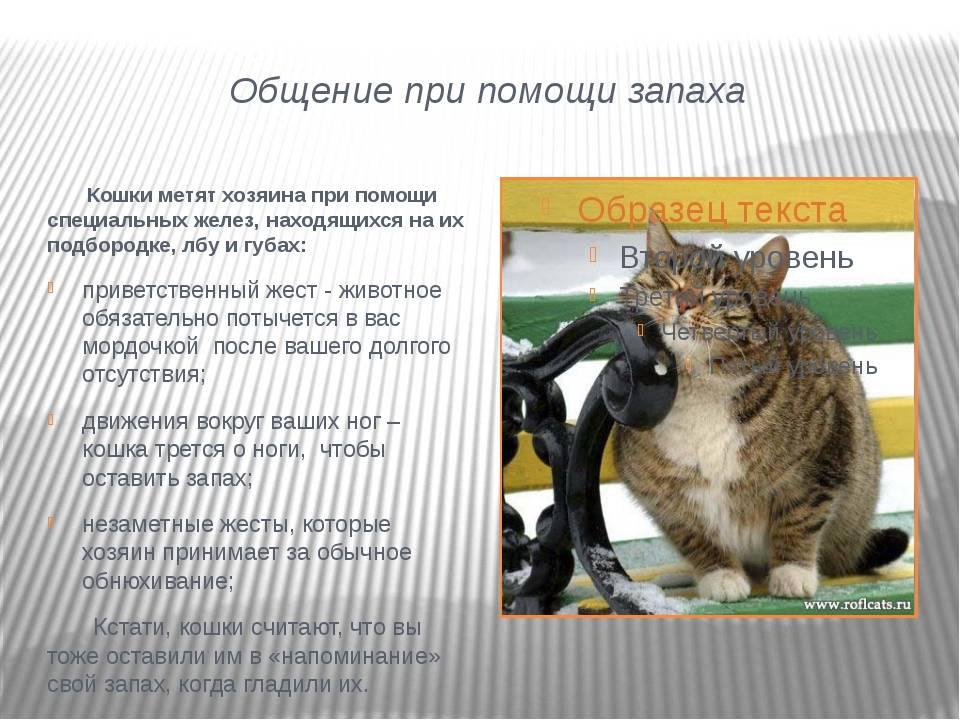 Почему кошка рычит и шипит без причины, как отучить, видео