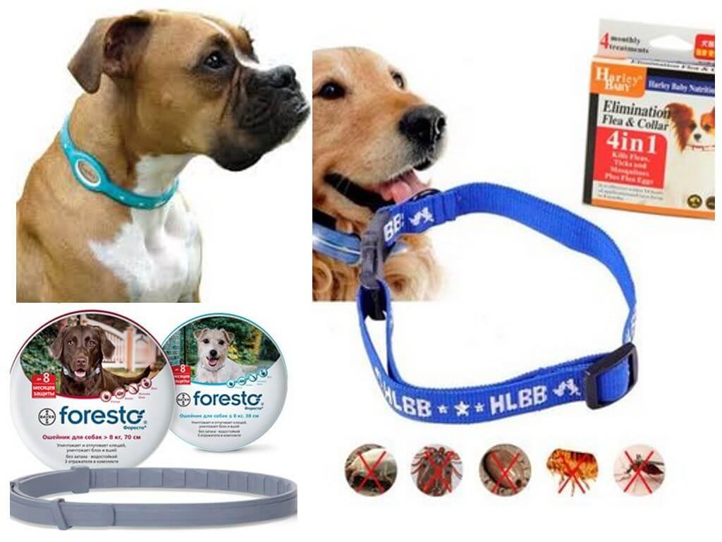 Рейтинг 8 эффективных средств от блох и клещей для собак