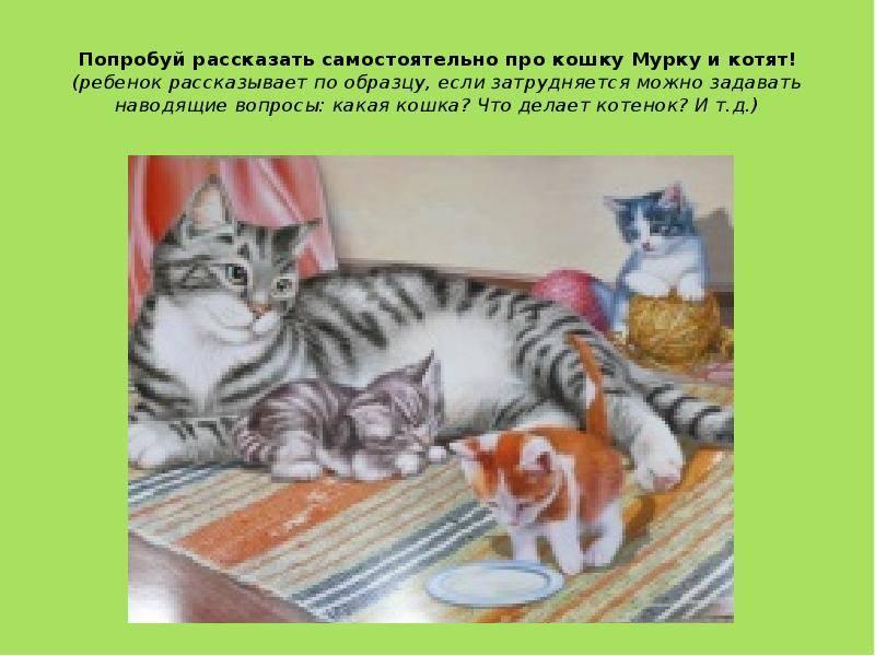 Как правильно воспитывать котенка, чтобы он был ласковым и спокойным, можно ли воспитать взрослого кота или кошку? как воспитать котенка послушным советы по воспитанию котят