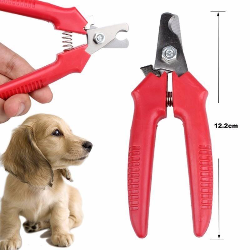 Когтерезка для собак: описание и критерии выбора, инструкция по использованию, помощь при травмах