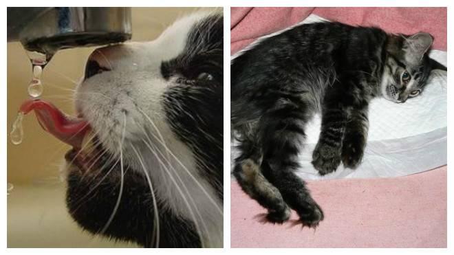 Кот хрипит и тяжело дышит: что делать