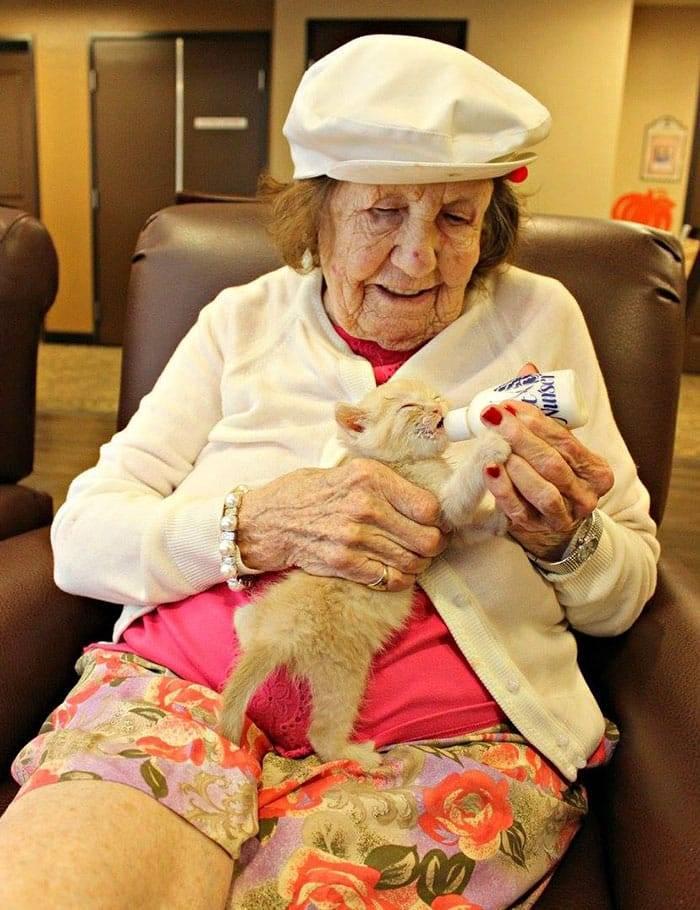 Как ухаживать за старой кошкой, возрастные изменения кошек и уход за ними, когда кошка считается пожилой — таблица возраста